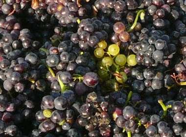 carr-taylor-vineyard